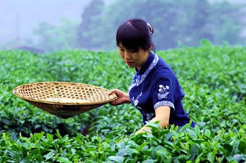 15-daagse rondreis Wuivend Bamboe